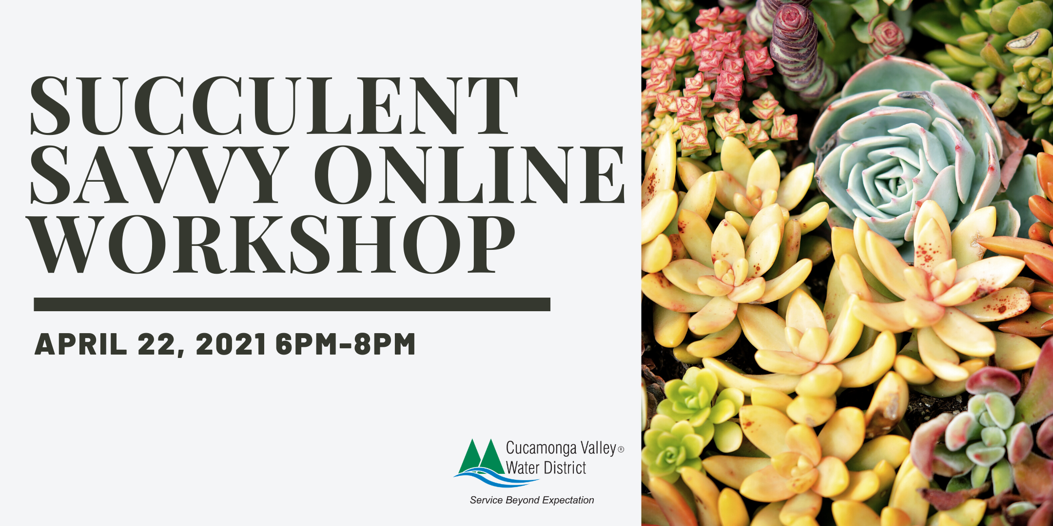 Succulent Savvy Online Workshop